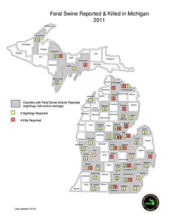 Feral Swine Sightings In Michigan Map.Mybaycity Com Here Piggy Br Open Season On Wild Boar Rooting In