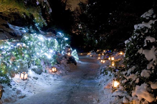 Dow Gardens 2020 Christmas Walk MyBayCity.Dow Gardens Silent Night   Glistening Night