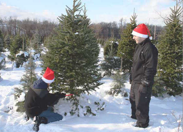 cutting your own christmas tree is just one of many activities available in the bay city area this time of year - Cut Your Own Christmas Tree